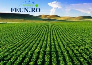 teren agricol f