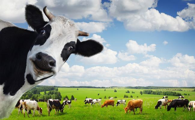 Noi reglementări privind pășunatul animalelor domestice