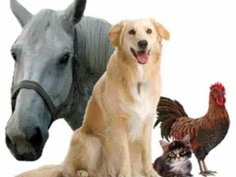 Cruzimea împotriva animalelor, un fenomen social tot mai răspândit