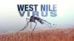 Caz îngrijorător: virusul West Nile depistat în județul Alba