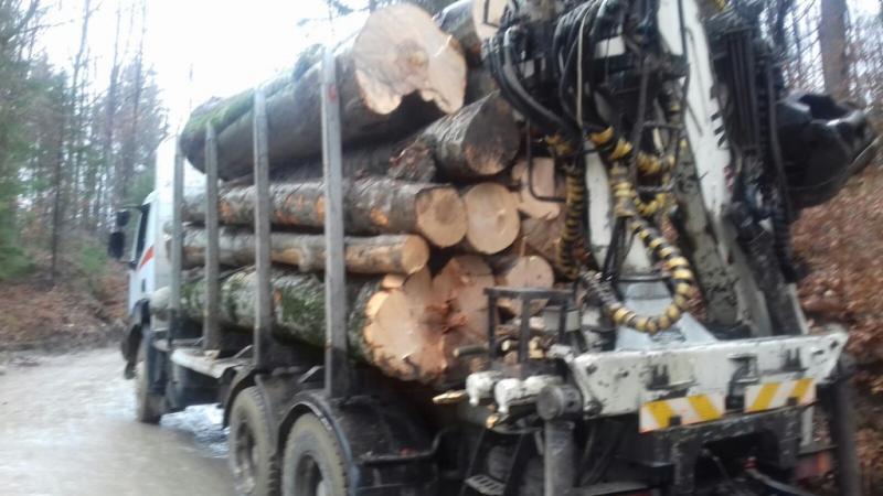 Transport ilegal de lemn la Feneș