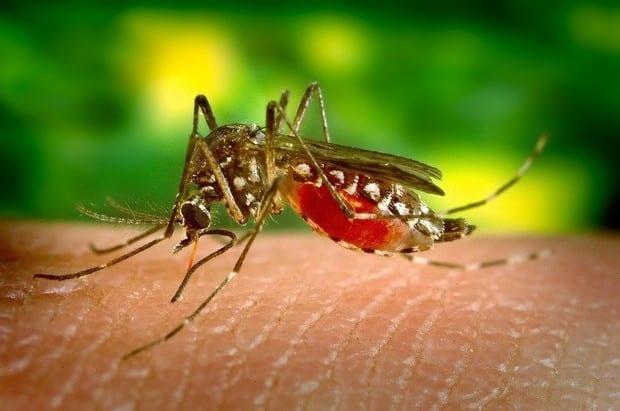 Al doilea caz de infecție cu virusul West Nile, confirmat în județul Alba.