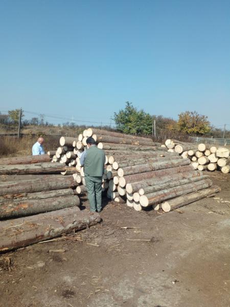 """Operațiunea """"Scutul pădurii"""", o luptă continuă contra infracțiunilor silvice"""