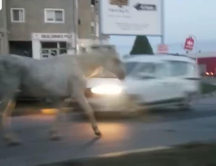 SEBEȘ : Caii se plimbă prin Municipiu ca in EVUL MEDIU! (video)