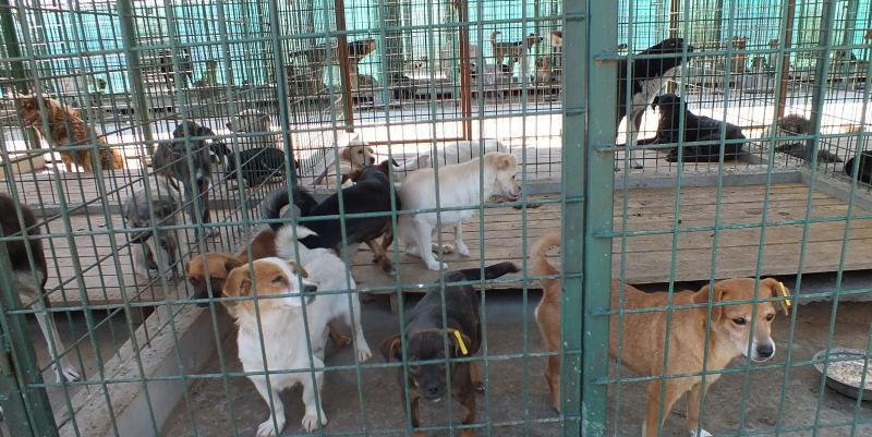 Campanie de adopții la distanță pentru câinii fără stăpân din Alba Iulia