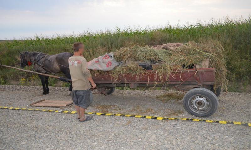 Câlnic – Un tânăr prins în flagrant după ce a furat 200 de kg de porumb