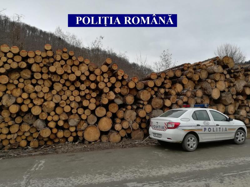 Bistra – Aproape 180 de mc de lemn fără documente legale, confiscat de polițiști