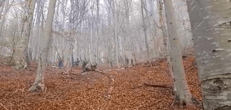 Incendiu de pădure în localitatea Spătac, lângă Blaj (video)