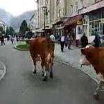 Cugir - Ciurda din Centrul orașului  (video)