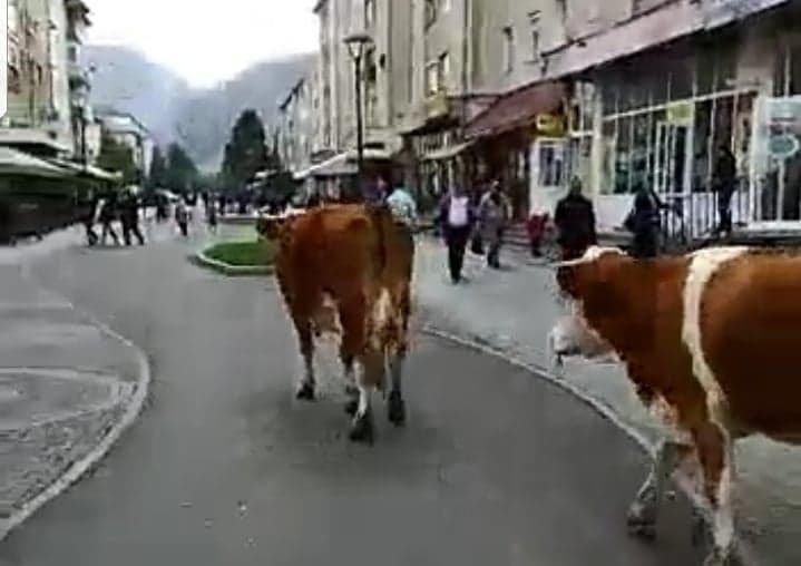 Cugir – Ciurda din Centrul orașului  (video)