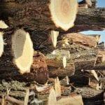 Romsilva a vândut în acest an populației peste 1,3 milioane de mc lemn pentru foc