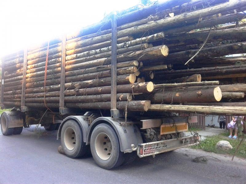 Abrud – 18 mc de lemn fără documente legale, confiscați de poliție