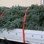 Vadu Moților - Hoț de brazi de Crăciun, prins de polițiști în miez de noapte