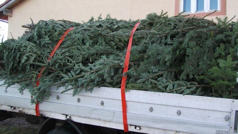 Vadu Moților – Hoț de brazi de Crăciun, prins de polițiști în miez de noapte