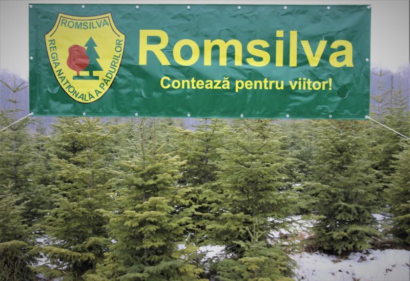 În acest an, peste 65.000 de pomi de Crăciun vor fi scoși la vânzare de Romsilva