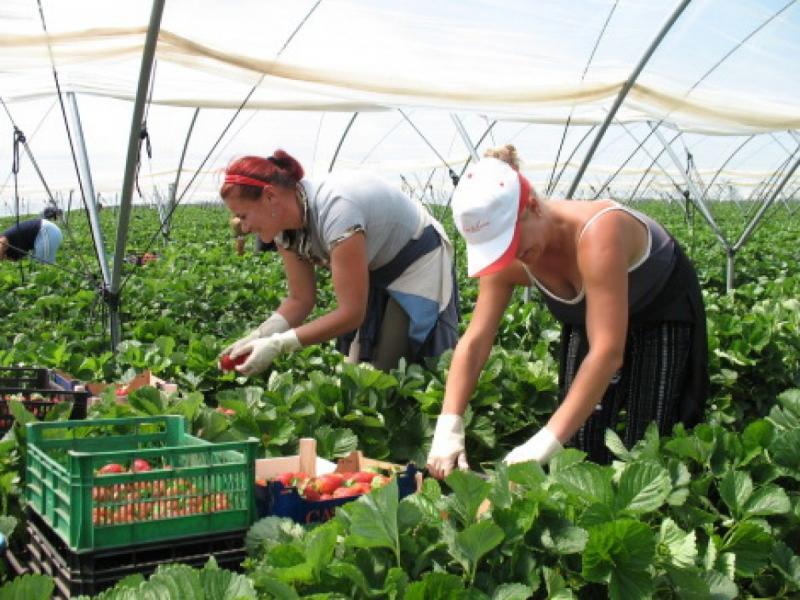 9 miliarde de euro în numai doi ani pentru fermierii români