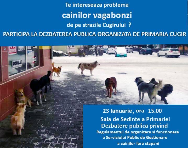 Cugir – Dezbatere publică pe tema câinilor vagabonzi