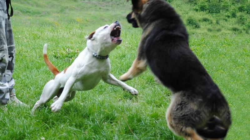 22 de proprietari de câini periculoși au fost amendați de Poliția Alba
