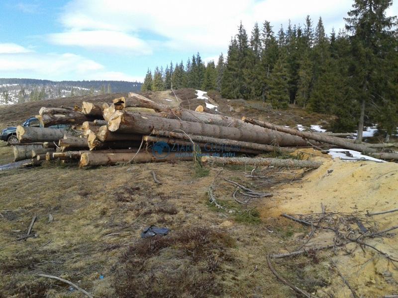 Poșaga – Bărbat cercetat pentru tăiere ilegală și furt de arbori