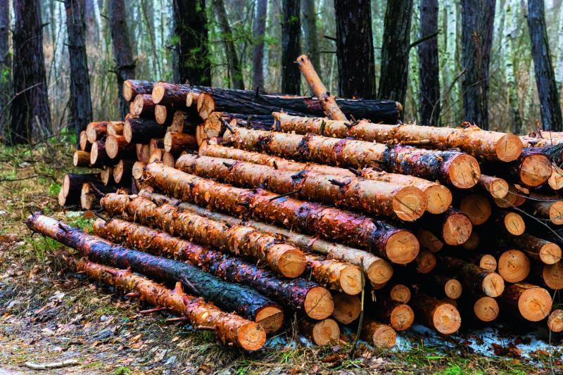 Vințu de Jos – Doi bărbați și un minor, prinși după ce au tăiat ilegal copaci în valoare de peste 10000 de lei
