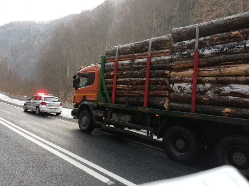 Alba – Acțiune județeană de prevenire și combatere a tăierilor ilegale de arbori (foto)