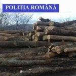 Cricău - Dosar penal pentru un bărbat care a tăiat fără drept 3,7 mc de material lemnos