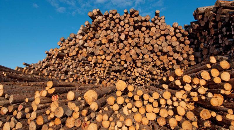 Bilanțul acțiunilor IGPR din 2018 realizate pentru protejarea fondului forestier național
