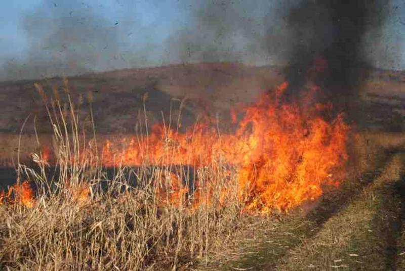 Bărăbanț – Incendiu de vegetație uscată pe strada Stejarului