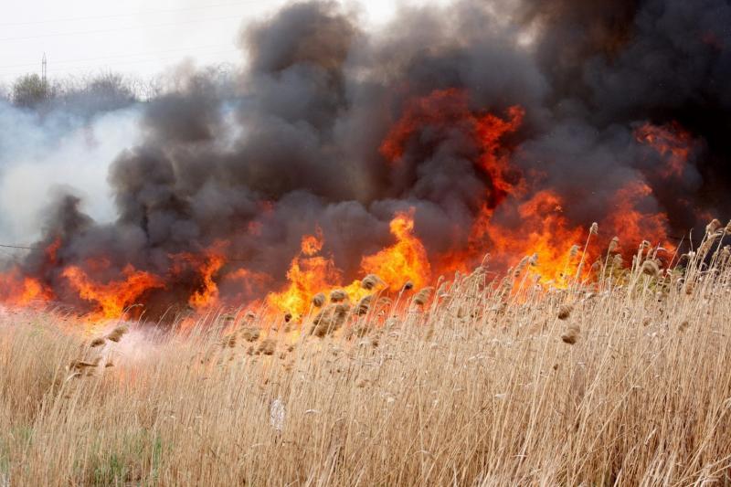 Incendiu de vegetație uscată în localitatea Gârbova de Jos