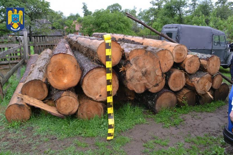 Prevenirea și combaterea tăierilor ilegale de arbori, o prioritate a IPJ Alba
