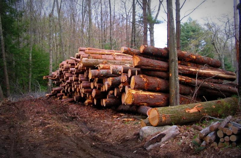 """Mai multe persoane depistate după au comis infracțiuni și contravenții silvice în cadrul operațiunii 'Scutul Pădurii"""""""