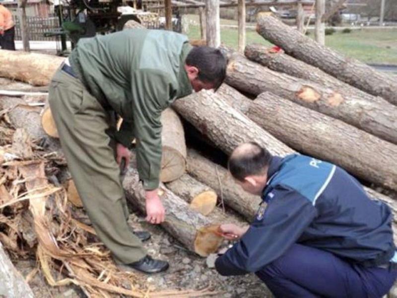 IPJ Alba – Amenzi de aproape 40000 de lei în urma unei acțiuni de prevenire și combatere a tăierilor ilegale de arbori