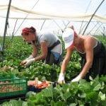 Perun Spedition angajează 300 de muncitori sezonieri pentru Germania