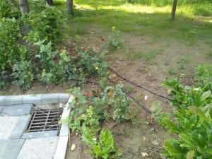 """Dorel """"lovește"""" din nou!?! Mai multe țevi ale instalației de irigare a spațiului verde din Parcul Unirii au rămas """"pe dinafară"""" (foto)"""
