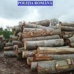 Sebeș - 63 de mc de material lemnos confiscat și o amendă în valoare de 10.000 de lei în urma unui control efectuat la o societate comercială