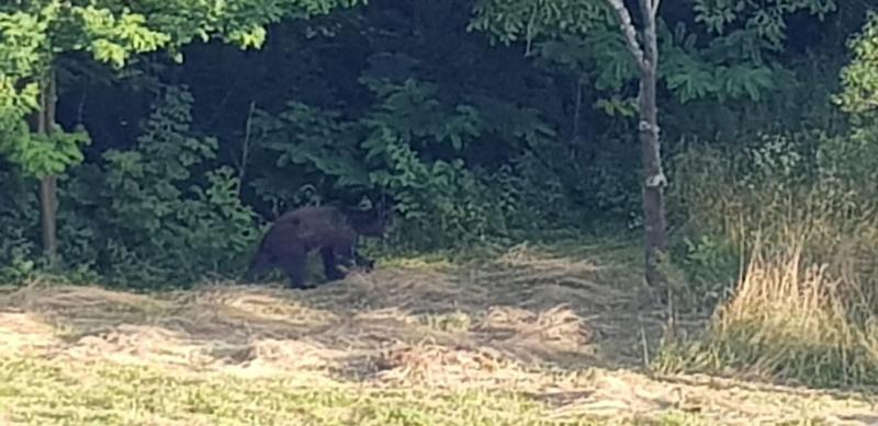 Recomandările Jandarmeriei Alba pentru evitarea producerii unor situații periculoase pentru cetățenii care au de-a face cu urșii