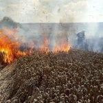 Incendiu - Un lan de grâu a luat foc în localitatea Beldiu, oraș Teiuș