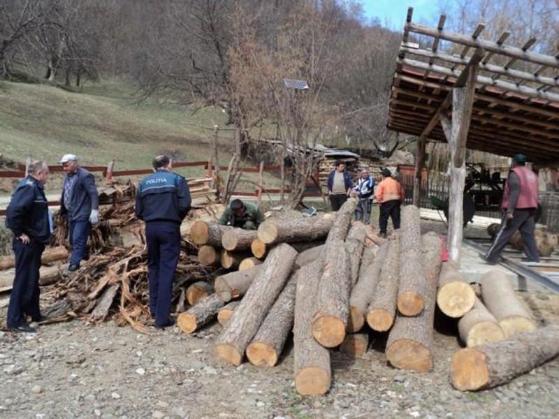 Amenzi de peste 70000 de lei în urma unei acțiuni a IPJ Alba organizată pentru prevenirea și combaterea tăierilor ilegale de arbori