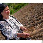 """Drumul cânepii"""", un nou studiu etnografic realizat de Centrul de Cultură """"Augustin Bena"""" Alba"""