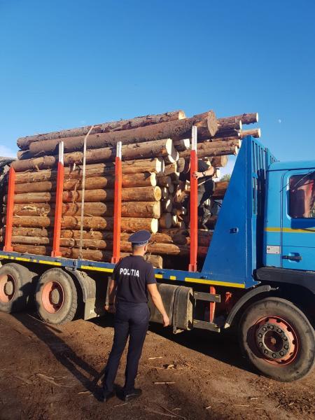 Un bărbat din Sohodol a fost prins în timp ce transporta cu o autoutilitară 16,9 mc de material lemnos fără documente legale