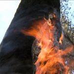 "Alba Iulia - Incendiu la un copac din fața Colegiului național ""H.C.C."""
