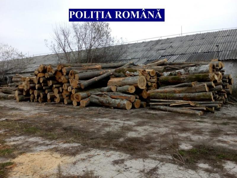 """Operațiunea """"Scutul Pădurii"""" – În primele 7 luni ale anului, Poliția Română a confiscat aproape 46.000 mc de material lemnos fără documente legale"""