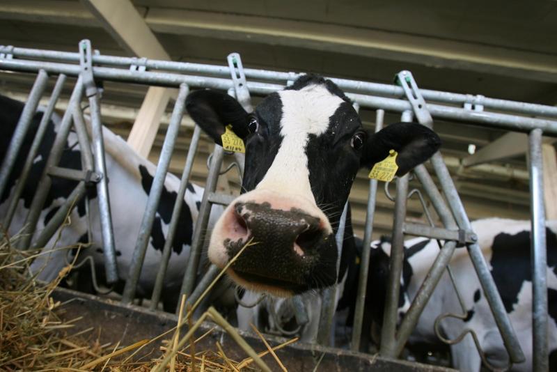 Controale la peste 140 de exploatații de animale din Alba privind respectarea cerințelor pentru acordarea subvențiilor