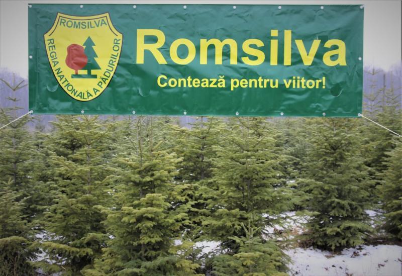 Raport – 2.000.000.000 de puieți forestieri plantați de Regia Națională a Pădurilor – Romsilva din 1991 până în prezent