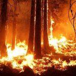 Sălciua - Dosar penal de distrugere din culpă pentru un bărbat care, din neatenție  a dat foc la o pădure