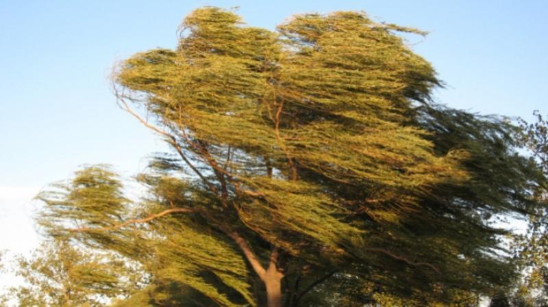 Atenție! Cod Galben de vânt puternic pentru zona montană a județului