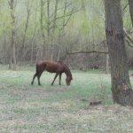 Fărău - Dosar penal emis pe numele unui tânăr care a furat un cal