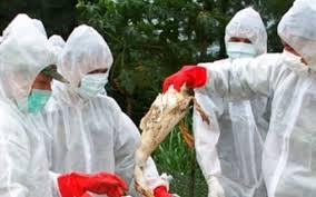 Măsurile luate de inspectorii sanitari veterinari din Alba pentru prevenirea apariției virusului gripei aviare
