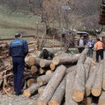 Acțiune a IPJ Alba soldată cu amenzi în valoare de 24.875 de lei și 46 de mc de lemn confiscat