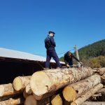 Apuseni - Amenzi și confiscări de lemn în urma unui control la două societăți comerciale depistate cu nereguli